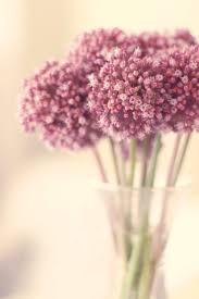 Indoor Flowering Plants by Best Indoor Plants Easy Plants To Grow