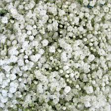 Wedding Flowers Greenery Greenery U2013 Bulk Flowers Tiki Aspidistra Salal Bear Grass