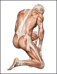 Back Knee Anatomy Pain In Knee When Kneeling Can Be Caused By