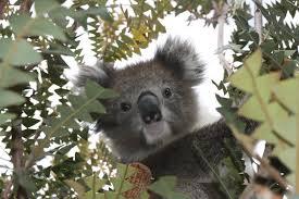 australian biology study abroad with ccsa