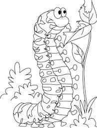 87 insects coloring pages images coloring