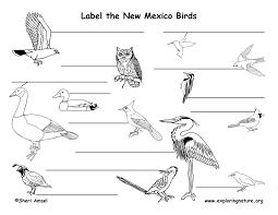 New Mexico birds images New mexico habitats mammals birds amphibians reptiles jpg