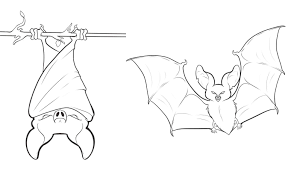 bat coloring pages coloring page