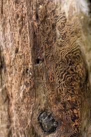 322 best patterns wood and bark images on textures