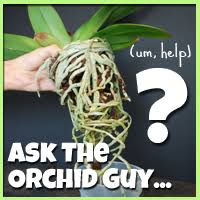 What Is An Orchid Flower - have an orchid question ask the orchid guy orchidsmadeeasy com