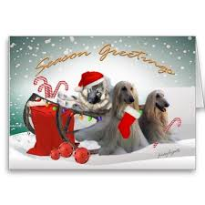 weimaraner vs afghan hound 15 best afghan hound christmas cards images on pinterest