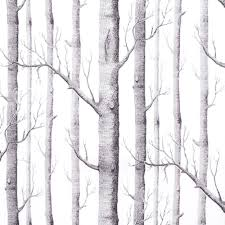 Wall Mural White Birch Trees Birch Tree Wallpaper Wallpapersafari