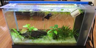 10 gallon planted tank led lighting first timer 10g low tech aquariacentral com