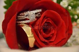 beautiful rose rings images Red rose stock photo image of rings meaning flower 38758842 jpg