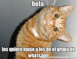 hola imagenes whatsapp hola los quiero muxo a los de el grupo de whatsapp meme de gatox