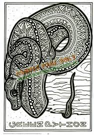 burrabooks pty ltd mp 1415 rainforest animal outlines