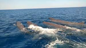 whale watching in the mediterranean youtube