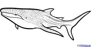 whale shark coloring pages