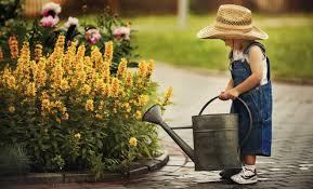 cura giardino cura giardino 7 consigli per il nostro verde estivo