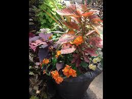 native plant nursery fort myers sanders nursery u2013 wholesale nursery and plant supplies