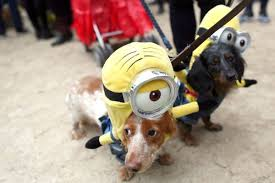 Mini Dachshund Halloween Costumes Halloween Candy Haul Poses Potential Harm Pets Newsday