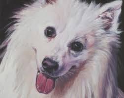 american eskimo dog nz eskimo dog portrait etsy