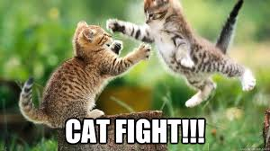 Cat Fight Meme - cat fight cat fight quickmeme