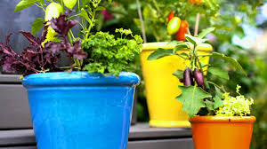 12 ideas for growing vegetables in containers gardening youtube