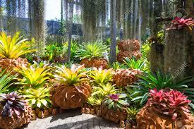 Nong Nooch Tropical Botanical Garden by Nong Nooch Tropical Garden In Thailand Stock Photo Picture And