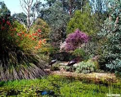 australian native plant nursery brisbane garden landscaping