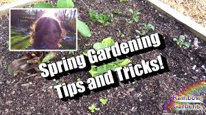 more than 7 spring garden tips and tricks 2 best spring herbs