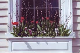 What To Plant In Window Flower Boxes - best flowers for spring window boxes