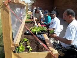 Urban Garden Denver - 74 best special needs gardening images on pinterest horticulture