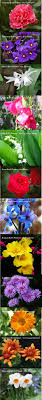 The Month Of June Flower - birthday flowers by month birth flowers shoulder and birthdays
