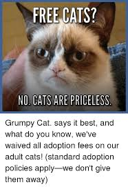 No Meme Grumpy Cat - 25 best memes about grumpy cat saying no grumpy cat saying no