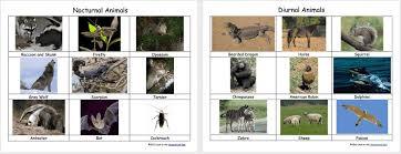 nocturnal diurnal animals free 3 part montessori cards