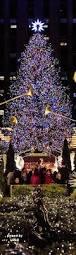 best 25 christmas tree photography ideas on pinterest