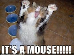 Scared Cat Meme - it s a mouse my contribution to this evil meme made with flickr