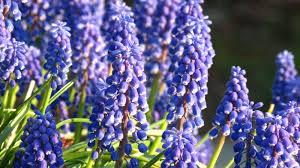 plants purple plant names inspirations beautiful plant plant