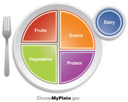 nutrition and diet anatomy and physiology