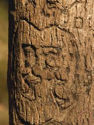 Initials Carved In Tree Raymond Gehman Heart And Initials Carved Into The Trunk Of A Tree