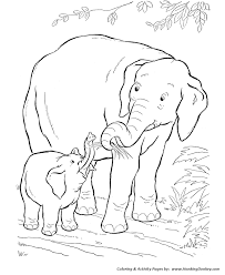 wild animal coloring pages baby elephant coloring kids