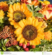 Fall Flowers Sunflowers And Fall Flowers Stock Photo Image 43237294