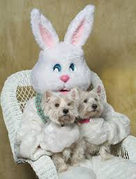 big easter bunny the terrier tattler