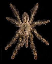 show a whole new side of spiders wired