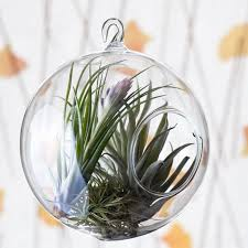 159 best air plants and succulents images on pinterest air