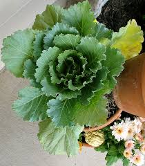 Fall Vegetable Garden Ideas by 78 Best Container Gardening Images On Pinterest Container
