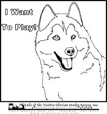 husky dog coloring free download