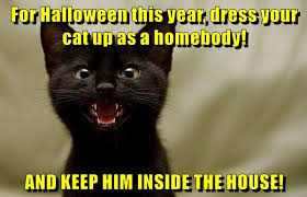 Memes Halloween - lolcats halloween lol at funny cat memes funny cat pictures