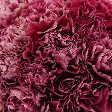 flowers wine ganache carnation flowers