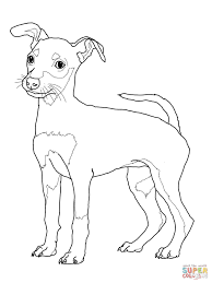 miniature pinscher puppy coloring page free printable coloring pages