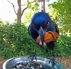 birdspotter 2017 18 feederwatch