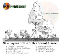 nine layers of the edible forest garden food forest temperate