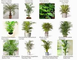 awesome house plants names and pictures interiorscaping compendium