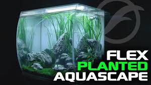 Tank Aquascape Planted Tank Aquascape Ft Fluval Flex Youtube